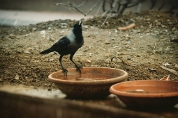 A #masterpiece takes lot of efforts to make it... #thirstycrow #birds #photography