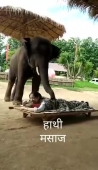 Elephant, Massage.