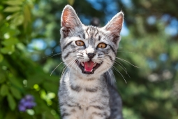 Cats can get coronavirus and pass it to other cats; dogs are much less susceptible to the virus: study