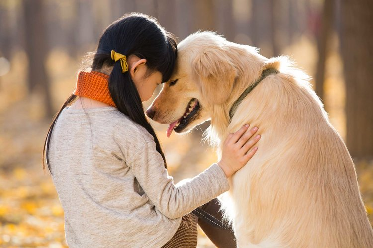 If animals are fond of rearing, then bring home these 5 best breed of dogs according to the Climate