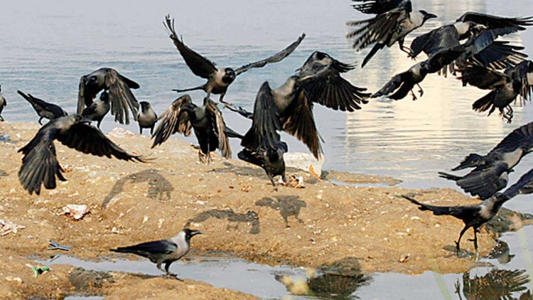 What is the Avian Virus ? How to save yourself from getting infected: Read to know more